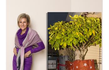 Biggi´s – All Age – Best Age Blog – Weihnachtspakete auf dem Balkon!