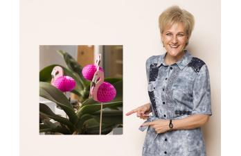 Biggi´s – All Age – Best Age Blog – Flamingo Revival!